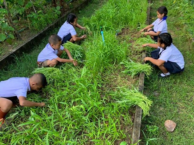 """ฝีกทักษะน้องเรียนรู้บริหารจัดการผลผลิตเกษตร สร้างความมั่นคงทางอาหาร """"ในโรงเรียนและชุมชน"""""""