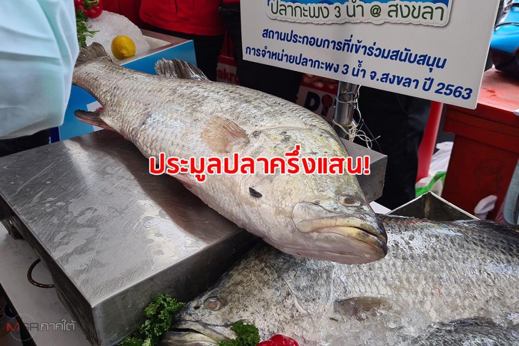 """ฮือฮา! ประมูล """"ปลากะพง"""" ราคาแพงสุดตัวละกว่า 5 หมื่นบาท ในงาน """"Food & Fish @ สงขลา"""""""