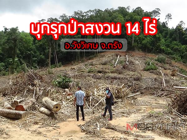 พบการบุกรุกป่าสงวนพื้นที่วังวิเศษ 14 ไร่ เชื่อเป็นขบวนการตัดไม้ส่งขายตามใบสั่ง