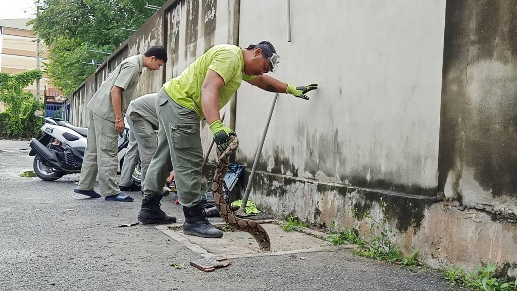 กู้ภัยเร่งช่วยเหลืองูเหลือมยาว 4 เมตรติดฝาท่อระบายน้ำ-ตาข่ายบ้านริมน้ำ