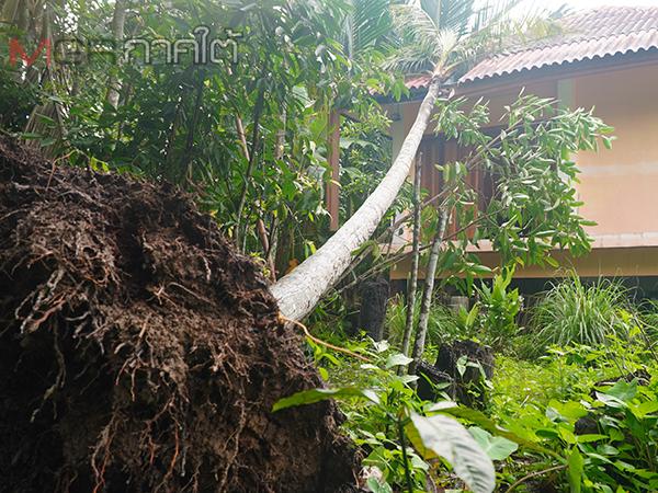 ฝนตกลมแรงพัดต้นไม้ล้มทับบ้านเรือนประชาชนพัทลุง ขณะที่ฝายท่าแนะระดับน้ำเกินพิกัด