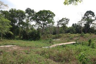 แปลงหญ้าที่ได้มีการทดลองปลูกที่ บริเวณพื้นที่ใกล้เคียงอุทยานแห่งชาติเขาชะเมา-เขาวง