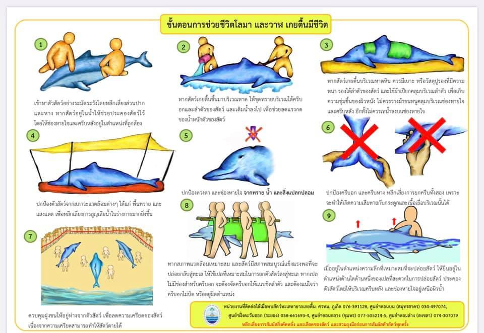 ภาพ - ขั้นตอนการช่วยสัตว์ทะเลเกยตื้น
