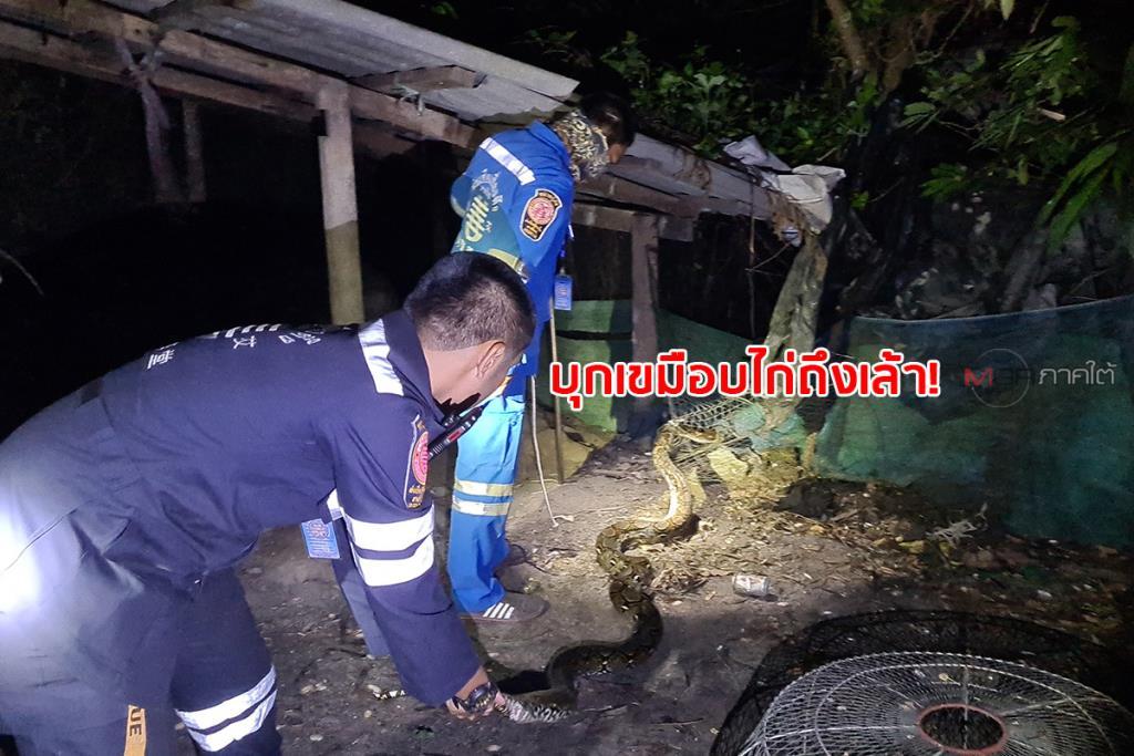 งูเหลือมบุกเข้าเล้าเขมือบไก่ของชาวบ้าน เจ้าของไปพบรีบเลื้อยหนีติดอวนไปไม่รอด
