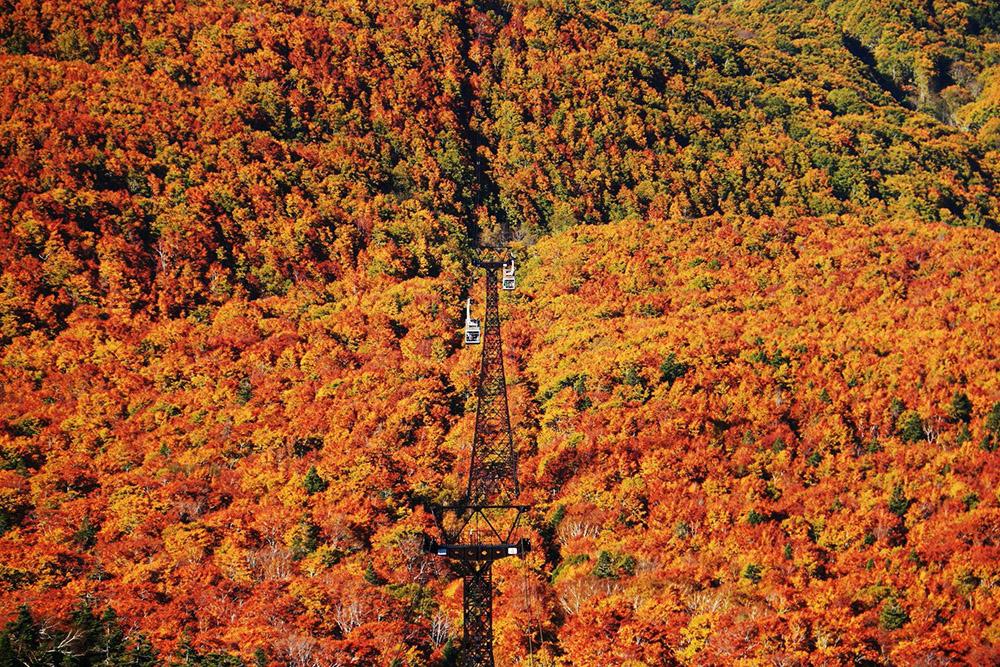 """สวยสุดใจ ใบไม้เปลี่ยนสีที่ """"Hakkoda Ropeway"""" ประเทศญี่ปุ่น"""
