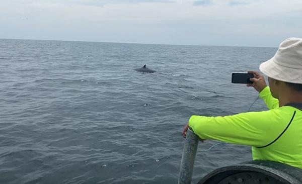 เริ่มแล้วเทศกาลชมวาฬบรูด้า ที่หาดเจ้าสำราญ