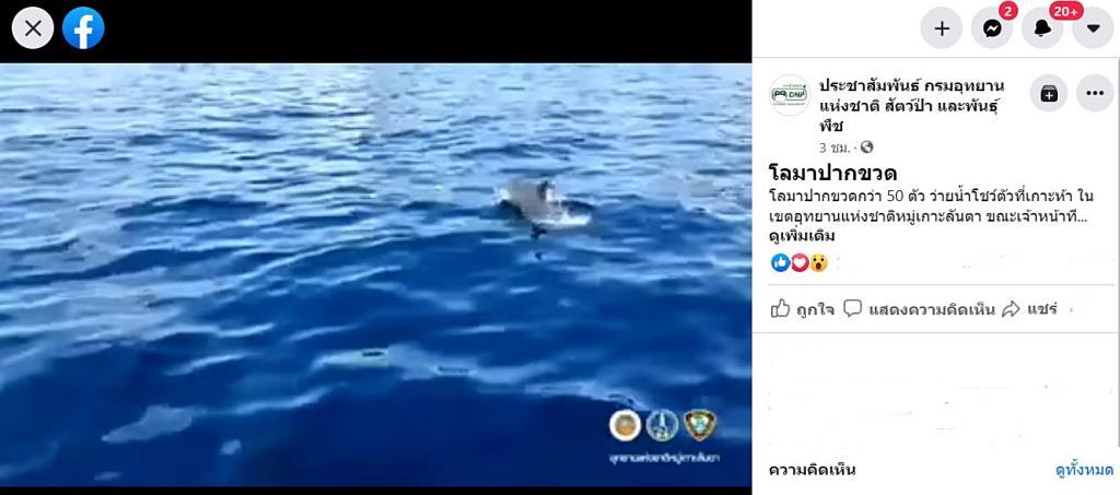 ชมคลิปโชว์ตัว!! ฝูงโลมาปากขวดกว่า 50 ตัว ไล่ต้อนฝูงปลาที่เกาะห้า