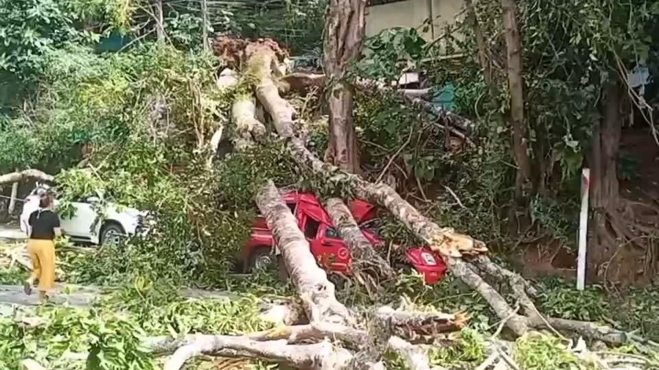 ต้นไม้ใหญ่ดอยสุเทพล้มทับรถยนต์พังยับ3คันบาดเจ็บ1คน