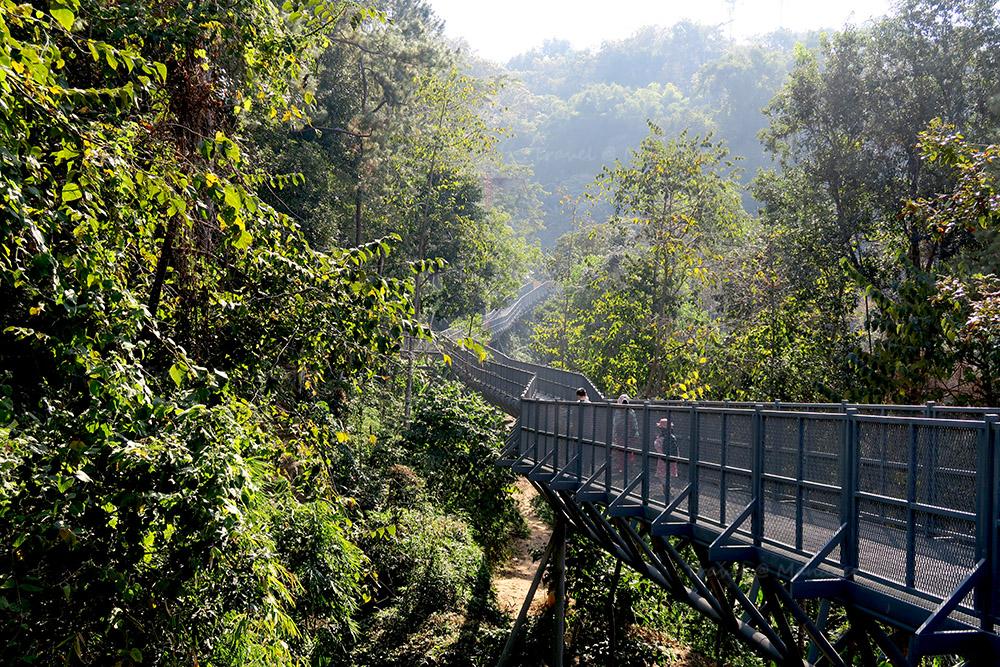 เส้นทางเดินชมธรรมชาติเหนือเรือนยอดไม้