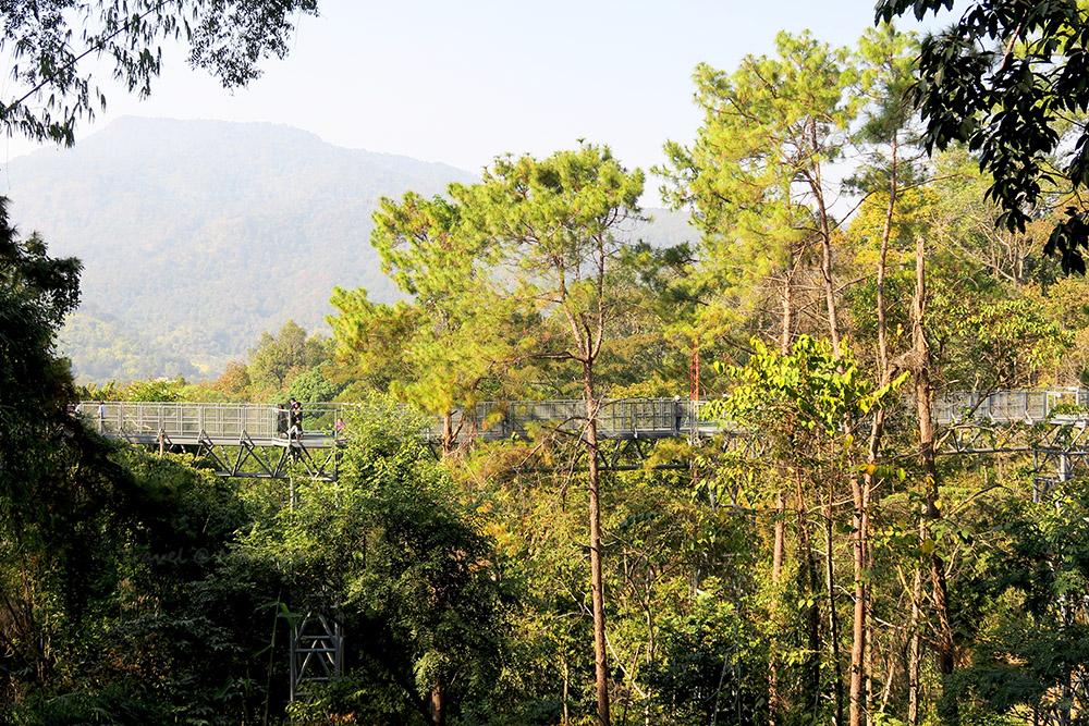 เส้นทางเดินชมธรรมชาติเหนือเรือนยอดไม้ที่ยาวที่สุดในประเทศไทย
