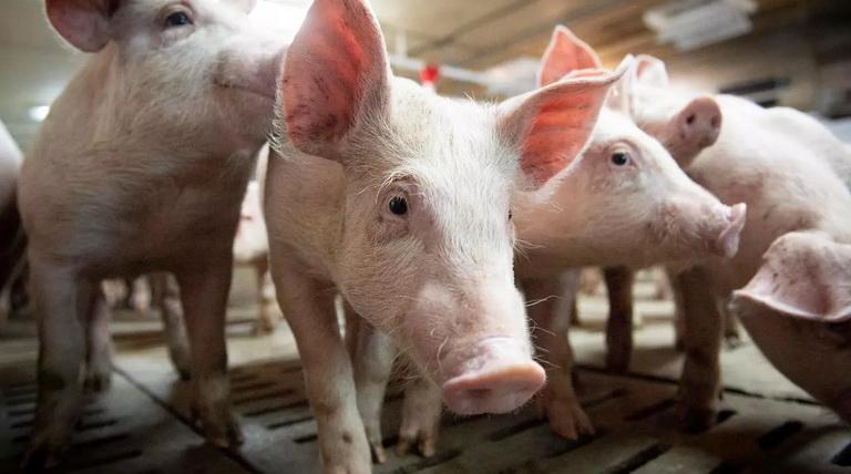 แคนาดาพบผู้ติดเชื้อไข้หวัดใหญ่ H1N2 รายแรกของประเทศ