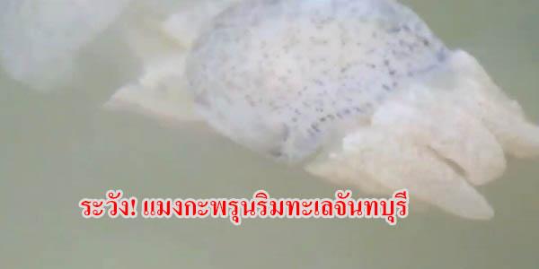 เตือน ปชช.ระวังแมงกะพรุนขณะลงเล่นน้ำชายหาดแหลมสิงห์ -ท่าใหม่ จ.จันทบุรี หลังพบแมงกะพรุนถ้วยนับล้านตัว