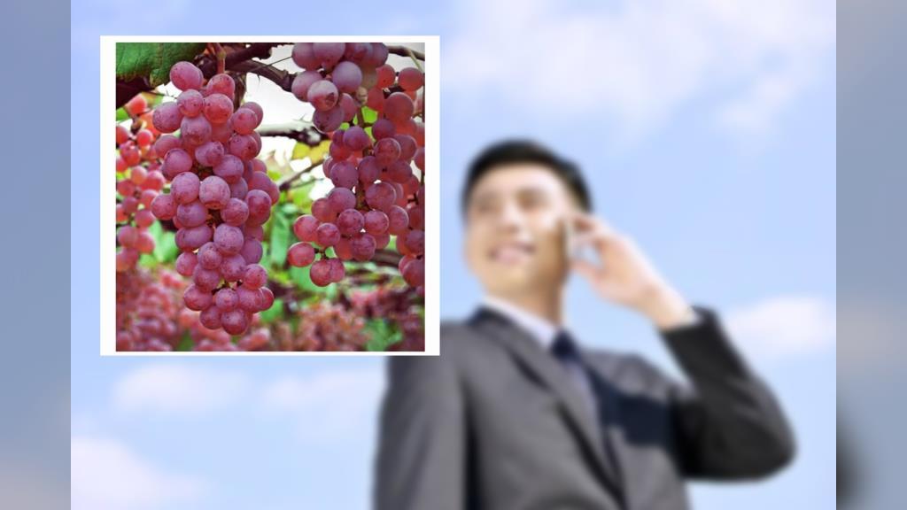 หนุ่มญี่ปุ่น เจ้าของสวนองุ่น อยากแต่งงานกับสาวไทย ประกาศนัดดูตัวที่ชินจุกุ 14 พ.ย.นี้