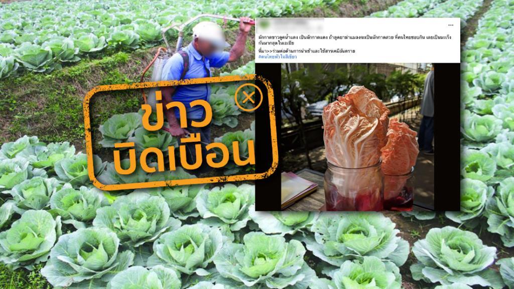 ข่าวบิดเบือน! ผักกาดขาวมักดูดซึมยาฆ่าแมลง เป็นเหตุทำให้คนไทยเป็นมะเร็งมากที่สุดในเอเชีย