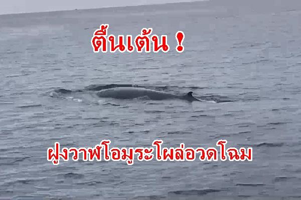 สุดตื่นเต้น ! ครั้งแรกในรอบ 10ปี พบฝูงวาฬโอมูระโผล่อวดโฉม