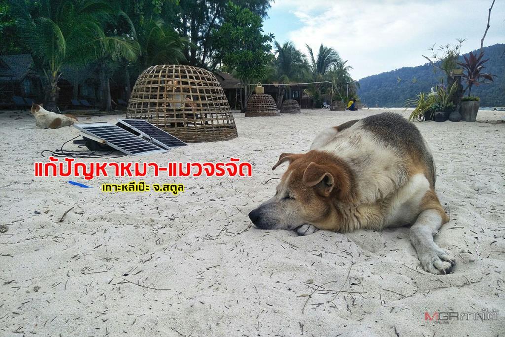 ลุยแก้ปัญหาสุนัข-แมวจรจัดบนเกาะหลีเป๊ะ ผู้ว่าฯ แนะขยายผลสู่เกาะอื่นสร้างภาพลักษณ์ท่องเที่ยว