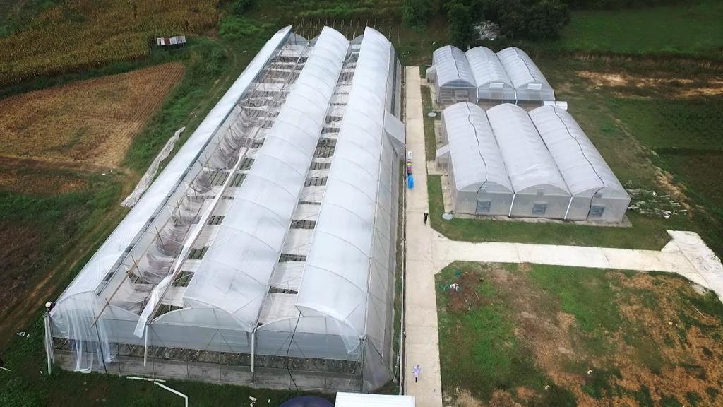 """สมชื่อไอดอลเกษตรไทย!""""เบนดิโต้ฟาร์ม""""ต่อยอดสตรอเบอรี่ผสมงาขี้ม่อน-ถั่ว ดันขึ้นชั้นของฝากปาย"""