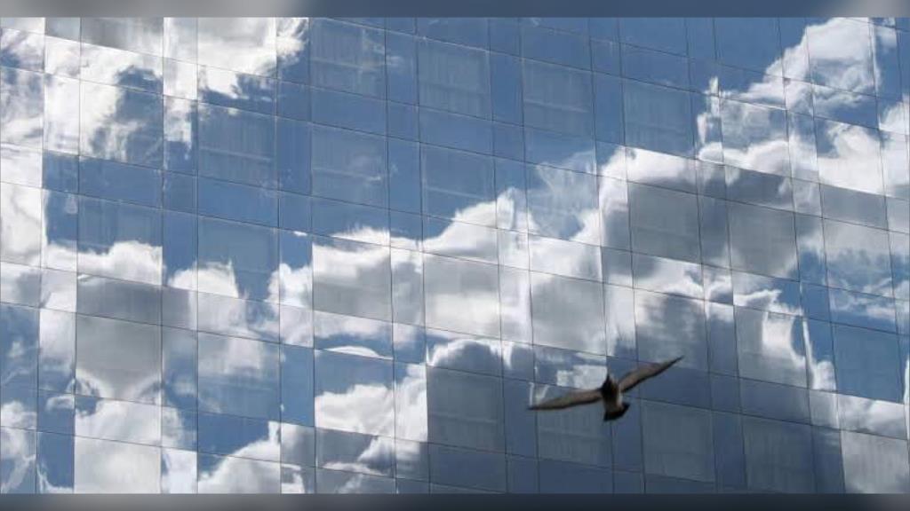 หมอนักอนุรักษ์ วอนหยุดใช้กระจกฉาบปรอทติดรอบตึกสูงกรุงเทพฯ หลังพบนกอพยพหลายตัวชน ทั้งเจ็บหนักและตาย