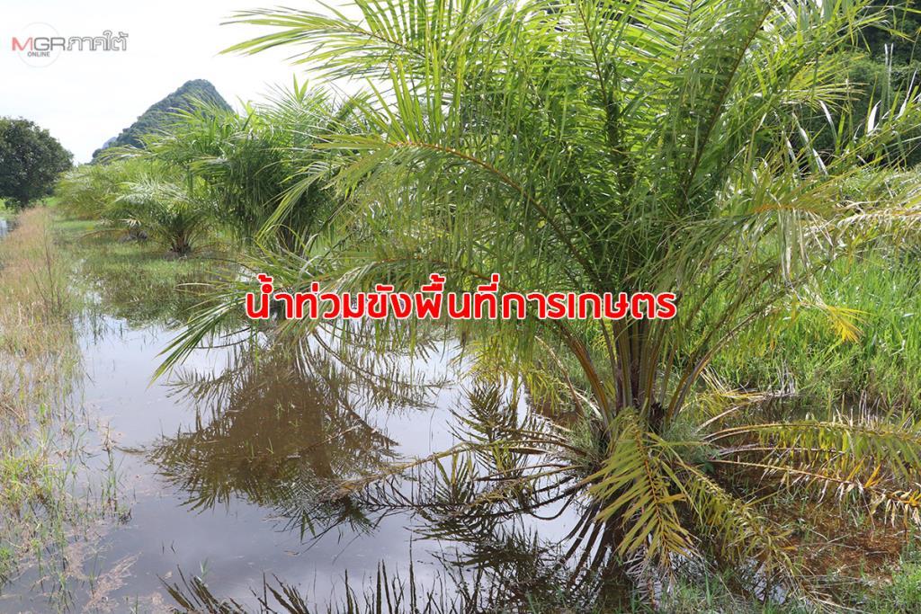 เมืองลุงเกิดฝนตกหนักทำน้ำท่วมพื้นที่ลุ่มการเกษตร และเส้นทางเข้าออกหมู่บ้าน