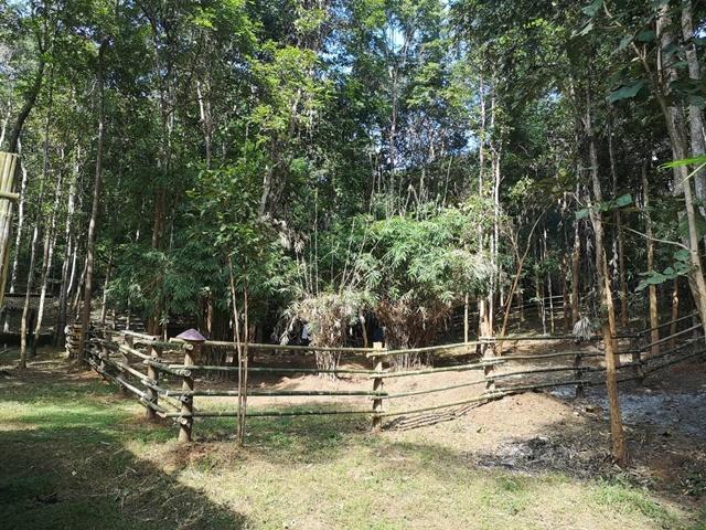 คอกใหม่ ในบ้านหลังใหม่ ที่หน่วยพิทักษ์ป่าหัวทุ่ง เขตรักษาพันธุ์สัตว์ป่าดอยผาเมือง
