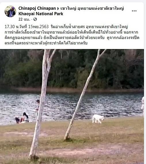 ไม่รู้ หรือท้าทายกฎ! นำหมาขึ้นอุทยานฯ เขาใหญ่ แถมปล่อยให้เดินเล่นอย่างสบายใจ