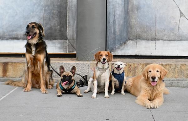 ตลาดบริการสัตว์เลี้ยงในอเมริกาถูกคาดหมายว่า จะมีมูลค่าเพิ่มขึ้นเป็น 64,000 ล้านดอลลาร์ใน 4 ปี