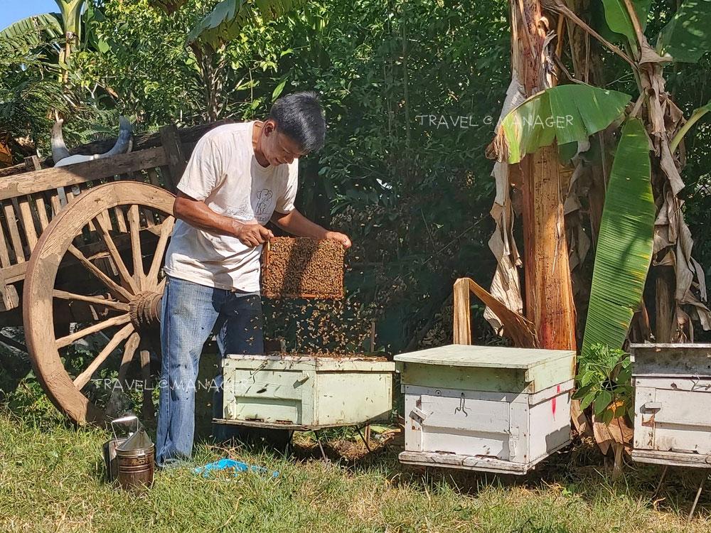การเลี้ยงผึ้งกล่องเป็นแนวป้องกันช้าง