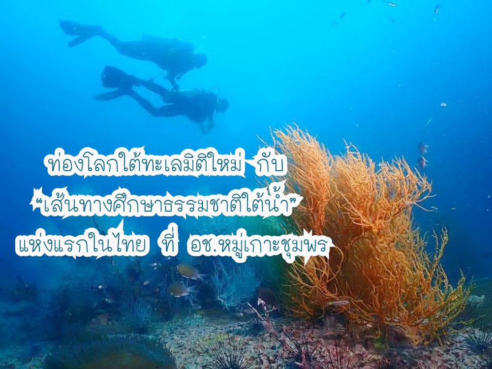"""ท่องโลกใต้ทะเลมิติใหม่ กับ  """"เส้นทางศึกษาธรรมชาติใต้น้ำ""""  แห่งแรกในไทย ที่ อช.หมู่เกาะชุมพร"""