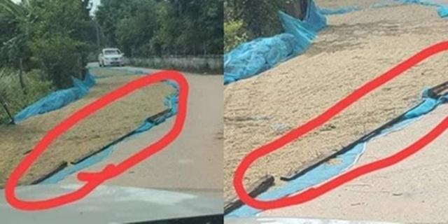 วิจารณ์สนั่น! เพจสายดาร์กเผยภาพ ชาวนาตากข้าวบนถนน แถมวางไม้ตอกตะปูกันรถวิ่งผ่าน