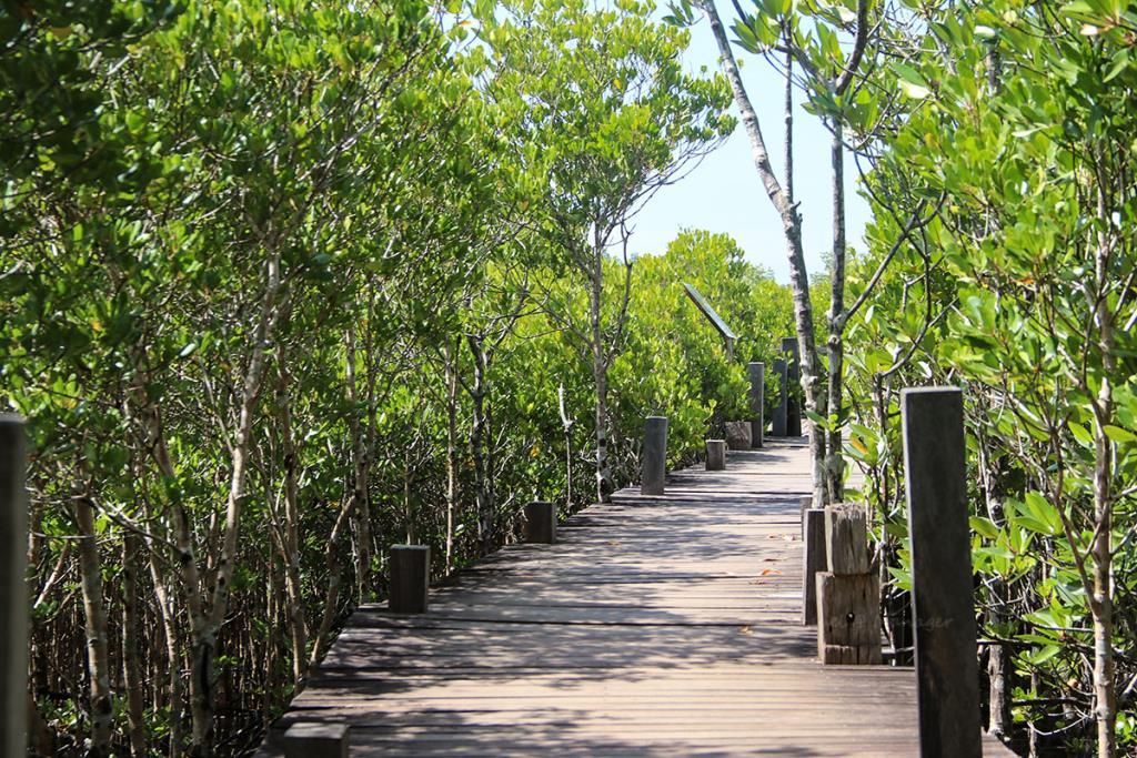 เส้นทางเดินผ่านป่าชายเลน