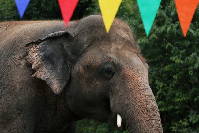 ปากีสถานเลี้ยงส่งช้าง 'พลายคาวัน' ก่อนเหินฟ้าไปใช้ชีวิตใหม่ในกัมพูชา