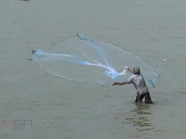 คึกคัก! ชาวประมงพื้นบ้านสงขลารวมตัวทอดแหจับปลากระบอก สร้างรายได้นับพันต่อวัน