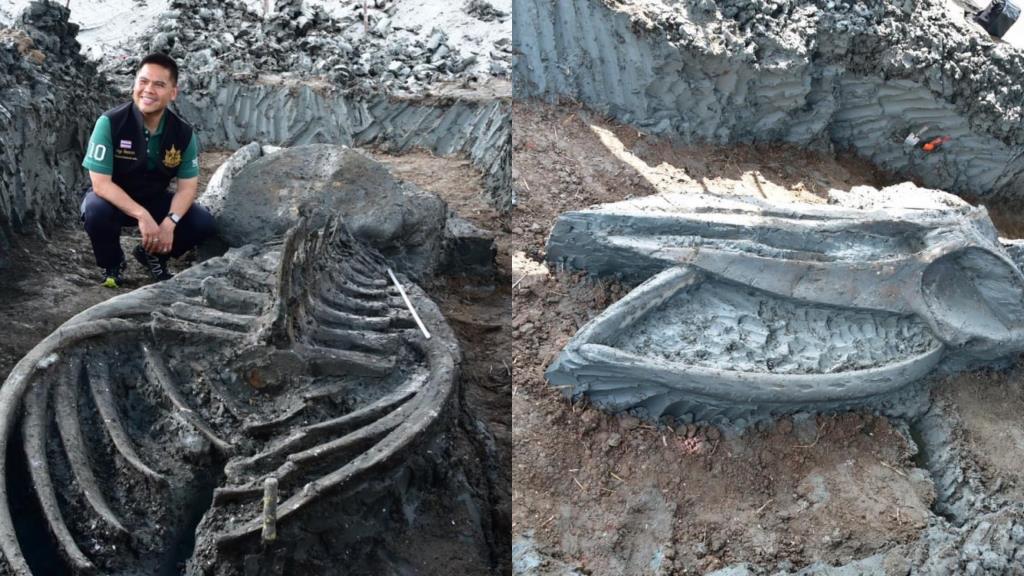 """รมว.ทรัพยากรฯ เผยภาพการค้นพบซาก """"วาฬโบราณ"""" บ้านแพ้ว"""