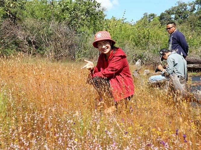 งามสะพรั่งดอกไม้ป่า@ภูผาเทิบ ไม้ดอกนามพระราชทานจากพระพันปีหลวง