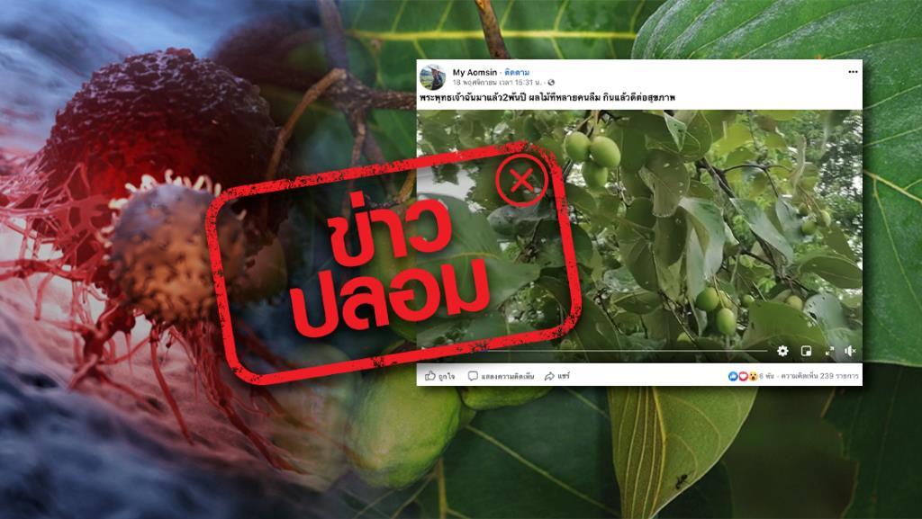 ข่าวปลอม! สมุนไพรสมอไทย ใช้รักษาโรคมะเร็งหาย