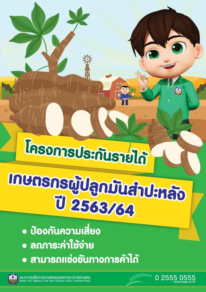 เริ่มแล้ว!จ่ายเงินประกันรายได้เกษตรกรปลูกมันสำปะหลัง