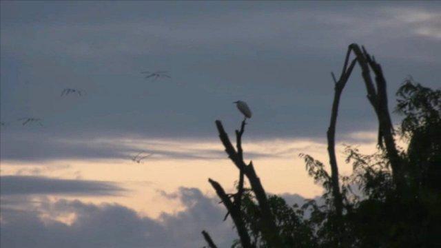 """งามพิสุทธิ์!ท้าเที่ยวบึงบอระเพ็ดกลางลมหนาว """"ทุ่งบัวบา""""ใหญ่สุดของไทยชูช่อแล้ว-นกหายากมาตรึม"""
