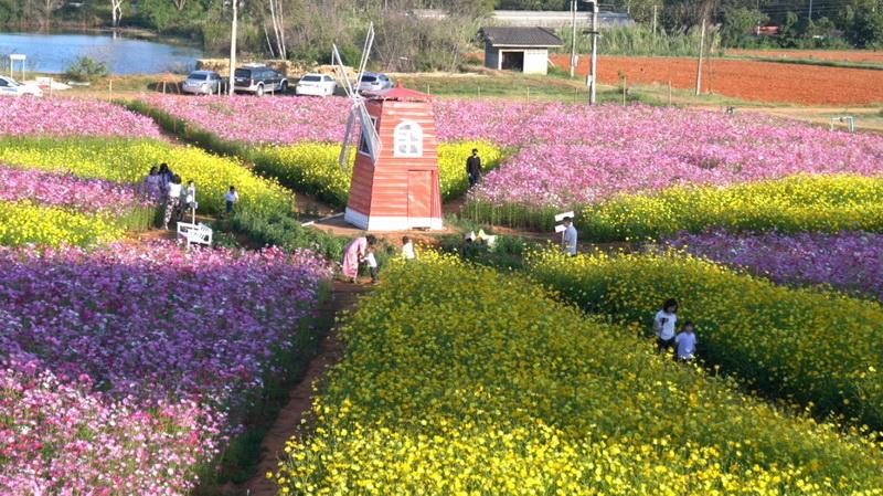 งามจับใจ!สวนดอกไม้หลากสีสันนับ100,000ต้น@ม.ขอนแก่น