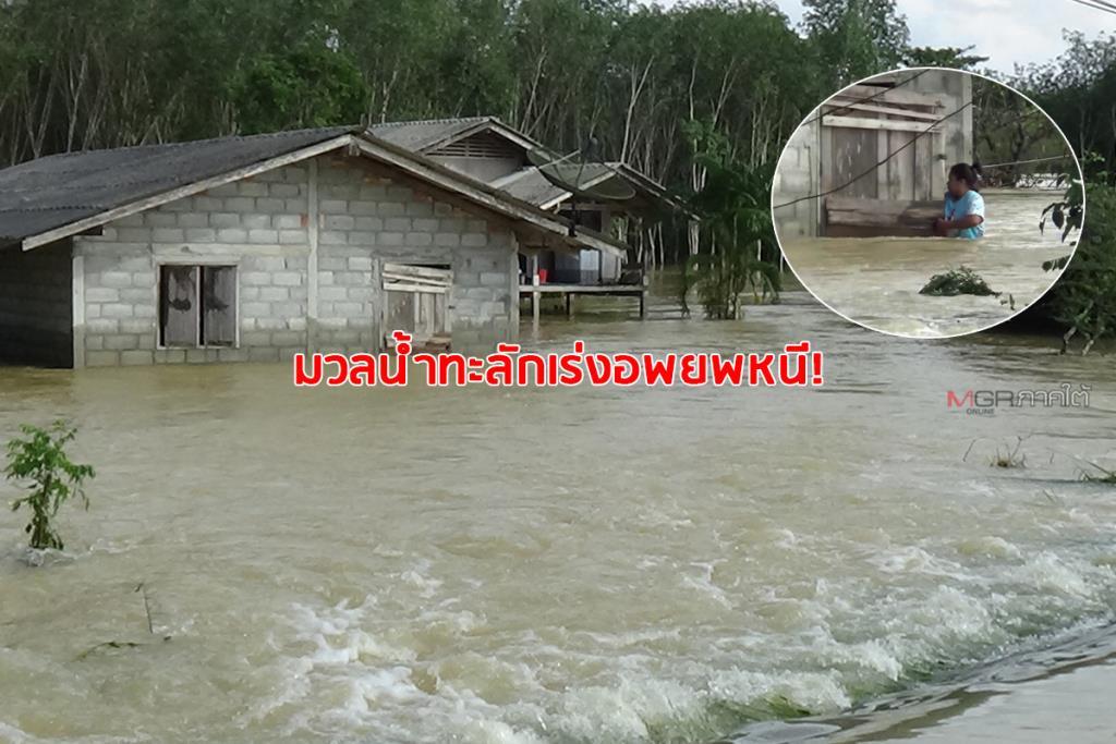 มวลน้ำก้อนมหึมา! ทะลักท่วมบ้านเรือนริมฝั่งแม่น้ำตรัง ชาวบ้านต้องเร่งอพยพหนี