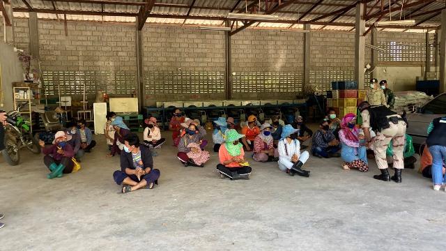 บุกตรวจสวนส้มดอยผาหมีพบแรงงานพม่าตรึม บ่ายนี้คนไทยตกค้างท่าขี้เหล็กกลับอีกล็อต