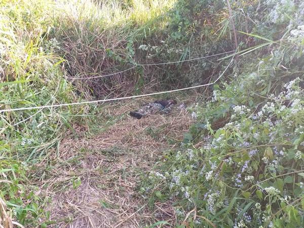 เศร้า!! เจ้าหน้าที่พิทักษ์ป่าฯ ทีมติดตามช้างป่าบาดเจ็บ ถูกช้างป่าทำร้ายเสียชีวิตที่ป่าเขาจ้าว