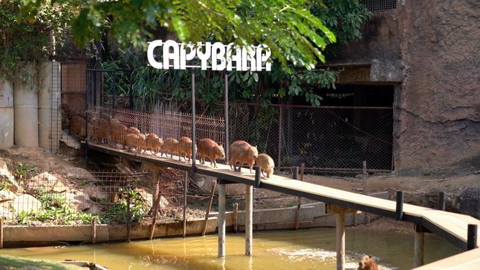 หยุดยาวสวนสัตว์ขอนแก่นคึกคักภายใต้มาตรการคัดกรองโควิด19เข้มงวด