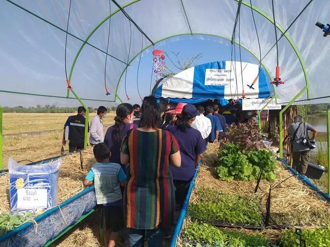 กรณีตัวอย่าง@ชาวบ้านแห้วใช้ที่ดินสาธารณะปลูกผักขายรายได้พัฒนาหมู่บ้าน