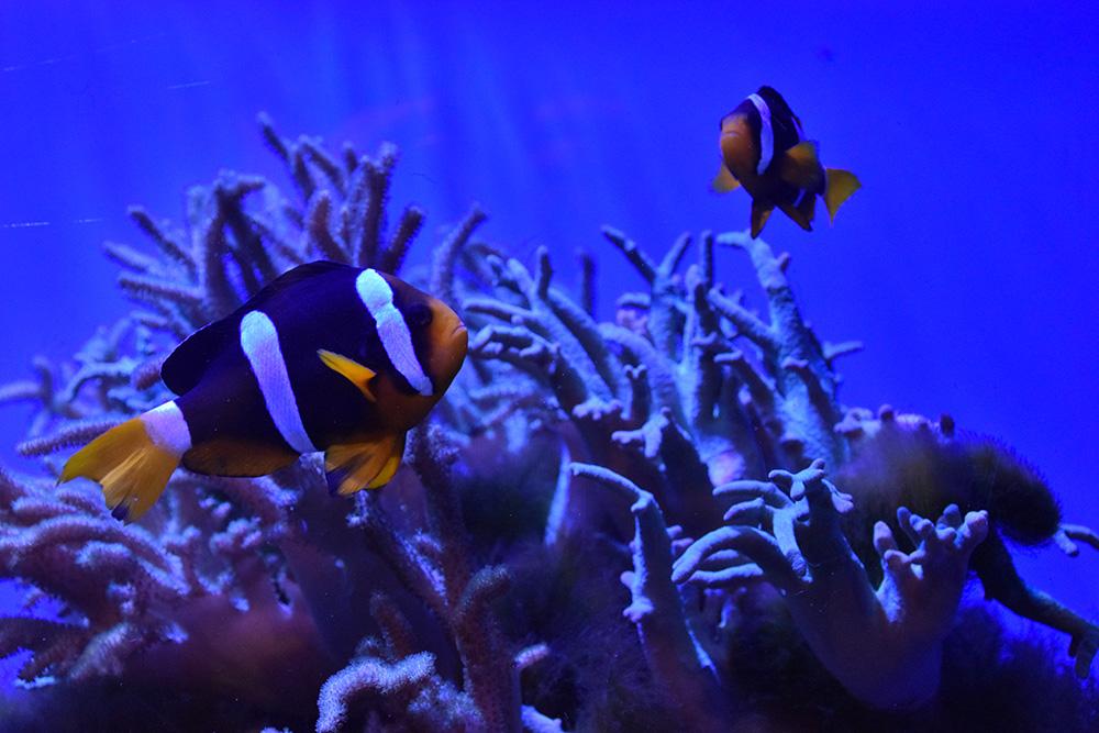 """พาชมสัตว์โลกใต้ทะเลน่ารักๆ ที่ """"สถาบันวิทยาศาสตร์ทางทะเล"""" จ.ชลบุรี"""