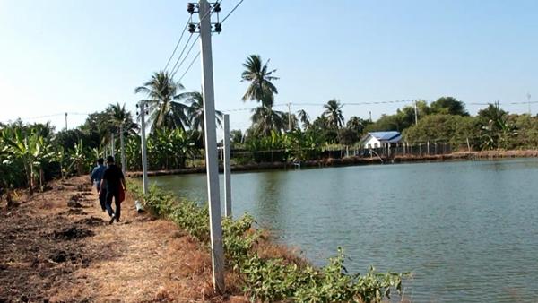 ราชบุรี ตั้งด่านเข้มสกัดโควิดเกษตรกรเลี้ยงกุ้งโอดรับผลกระทบเต็ม