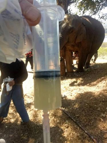 ปั๊มนมจากเต้าแม่ช้างวาเลนไทน์มาด้วย ถ้าผลปลอดภัย ทับเสลาจะได้ลอง