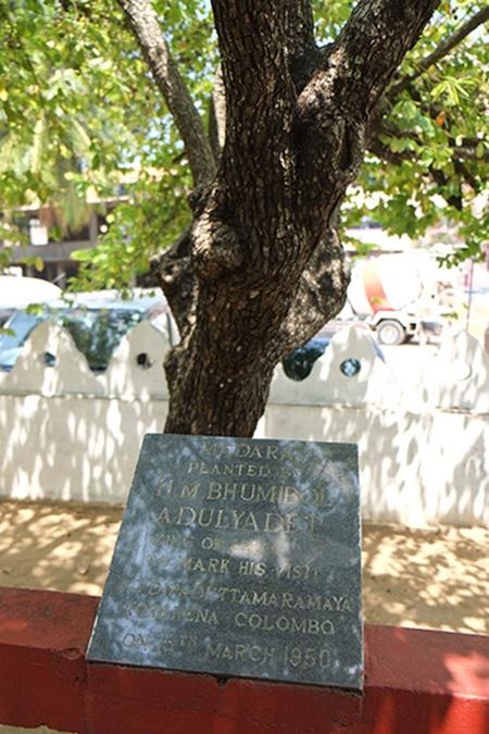 ต้นไม้ที่ ร.๙ ทรงปลูกที่วัดทีปทุตตมาราม