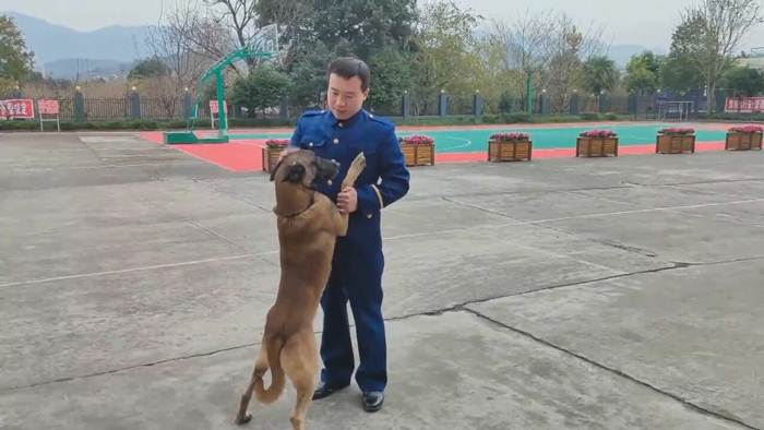 (ชมคลิป) ลึกซึ้งเกินบรรยาย! 'สุนัขดมกลิ่น' วิ่งสุดชีวิตไล่ตามรถ 'ครูฝึกเพื่อนรัก'