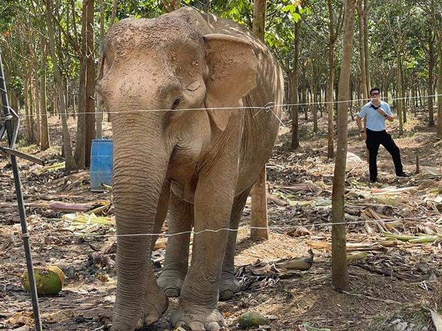'พังยายเกตุ' นางงามมิตรภาพ สานรอยร้าวเรื่องดรามา คนกับช้างป่า