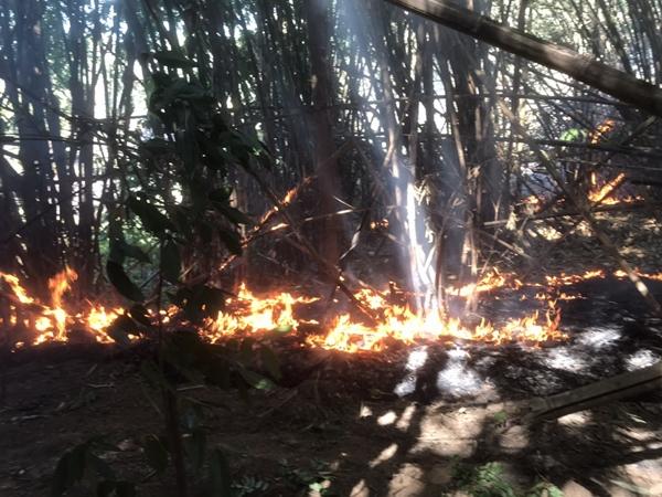 กรมอุทยานฯ ตั้งรางวัล 10,000 บาท นำจับขบวนการลอบเผาป่า